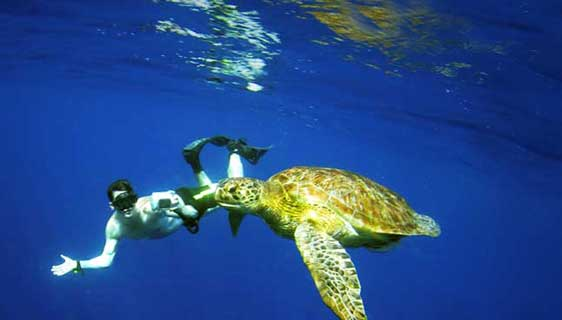 Snorkelling with a turtle in the Similan Islands