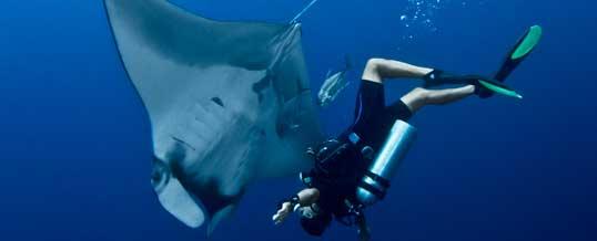Diver and Manta Ray at Koh Bon in the Similan Islands
