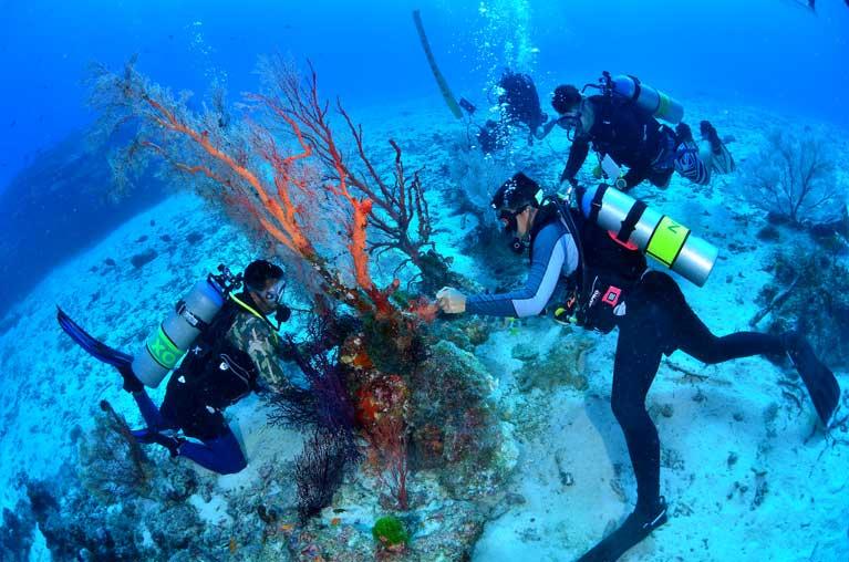 Repairing a seafan underwater